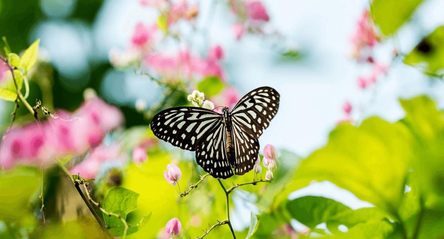Memotret Dari Geliat Pada Kehidupan Kupu-kupu