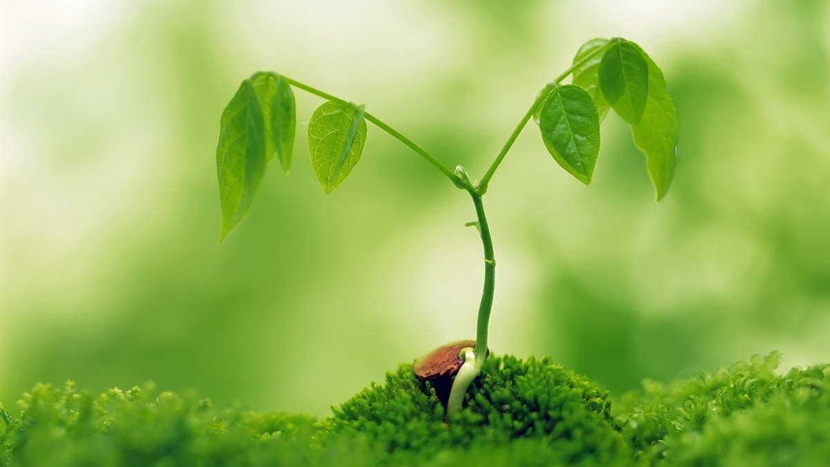 Adaptasi daripada tumbuhan