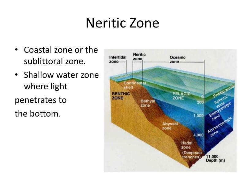Zona Neritik