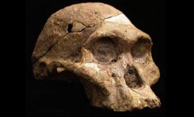 Imbalan Penemu Fosil